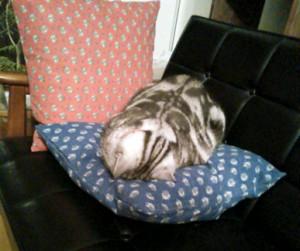 土下座するように…寝ています土下座するように…寝ています