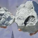 アルジタル グリーンクレイの丘 化石