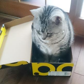 cat03